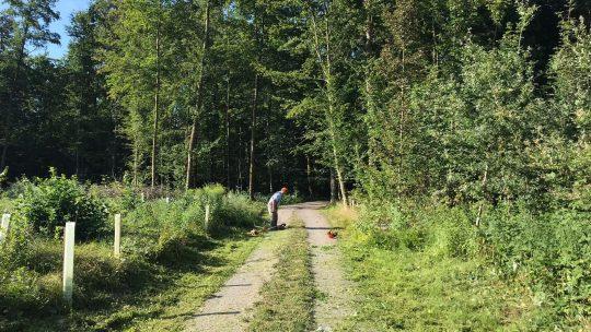 Rasen mähen entlang des Trimm-Dich-Pfades
